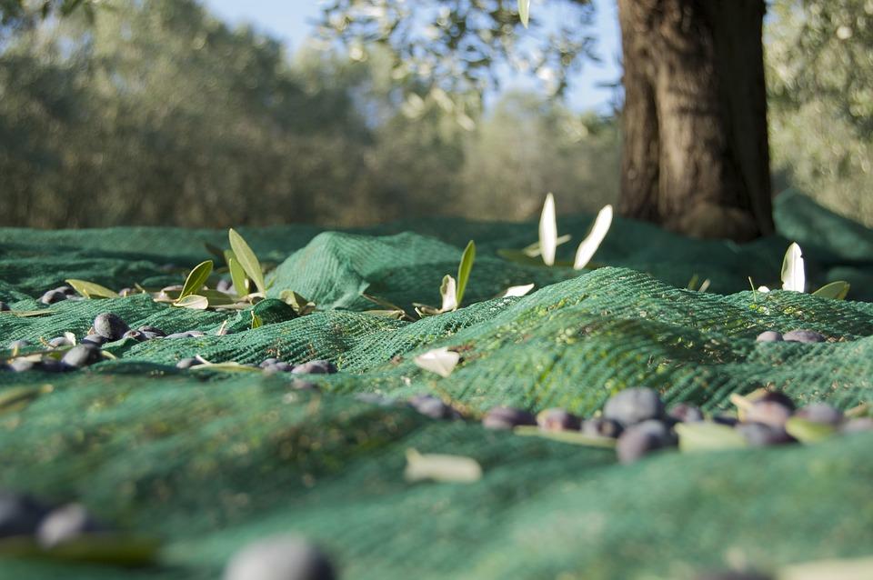 Un approccio digitale all'agricoltura: Gli uliveti come caso concreto