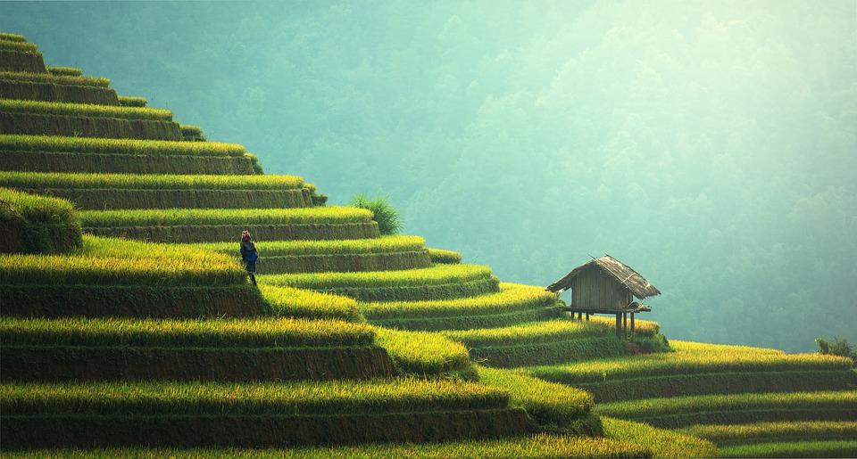 Agricoltura di precisione, vantaggi e necessità