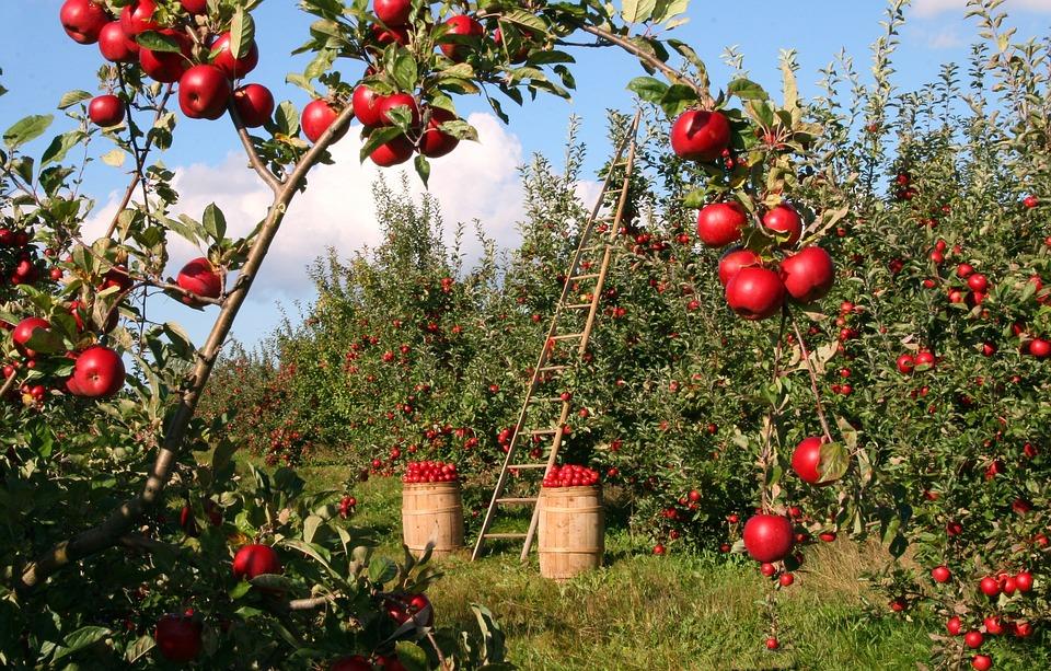 Agricoltura di precisione per i frutteti