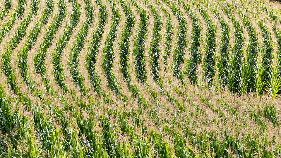 Agricoltura di precisione: Il caso del mais negli USA