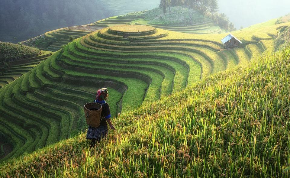 Omica Farm, precision farming and China.
